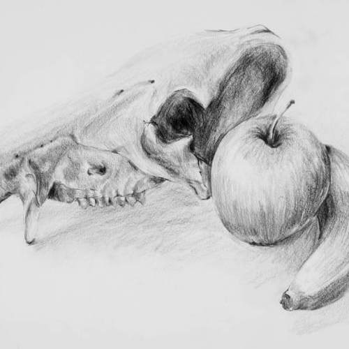 Square pig skull   fruit jpg